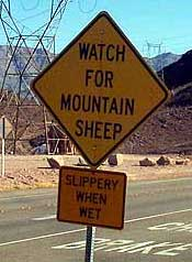 WATCH FOR MOUNTAIN SHEEP; SLIPPERY WHEN WET